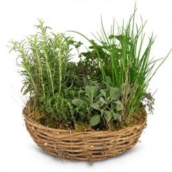 Corbeille de plantes...