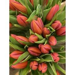 Bouquet de tulipes rouges