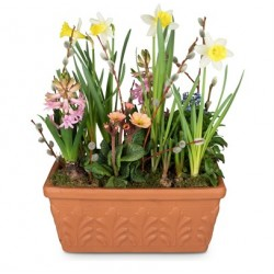 Petit jardin de printemps