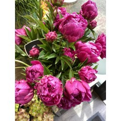Bouquet de pivoines fuchsias