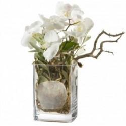 Des orchidées, autrement...