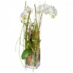 Magie d'orchidée en plante...